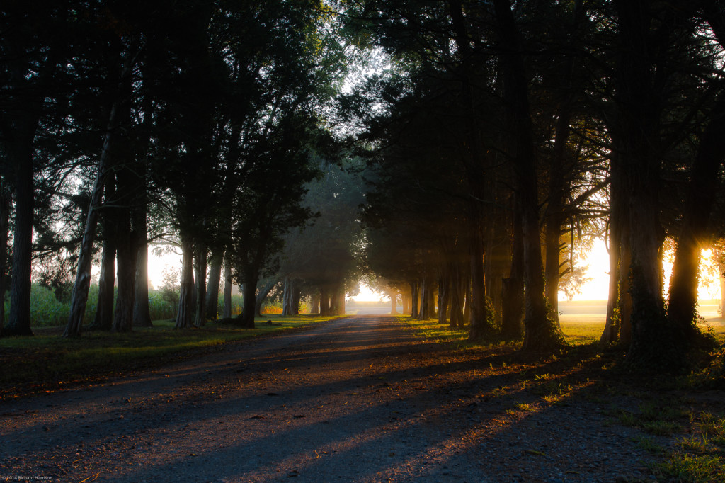 Along The Morning Lane - Belle Grove